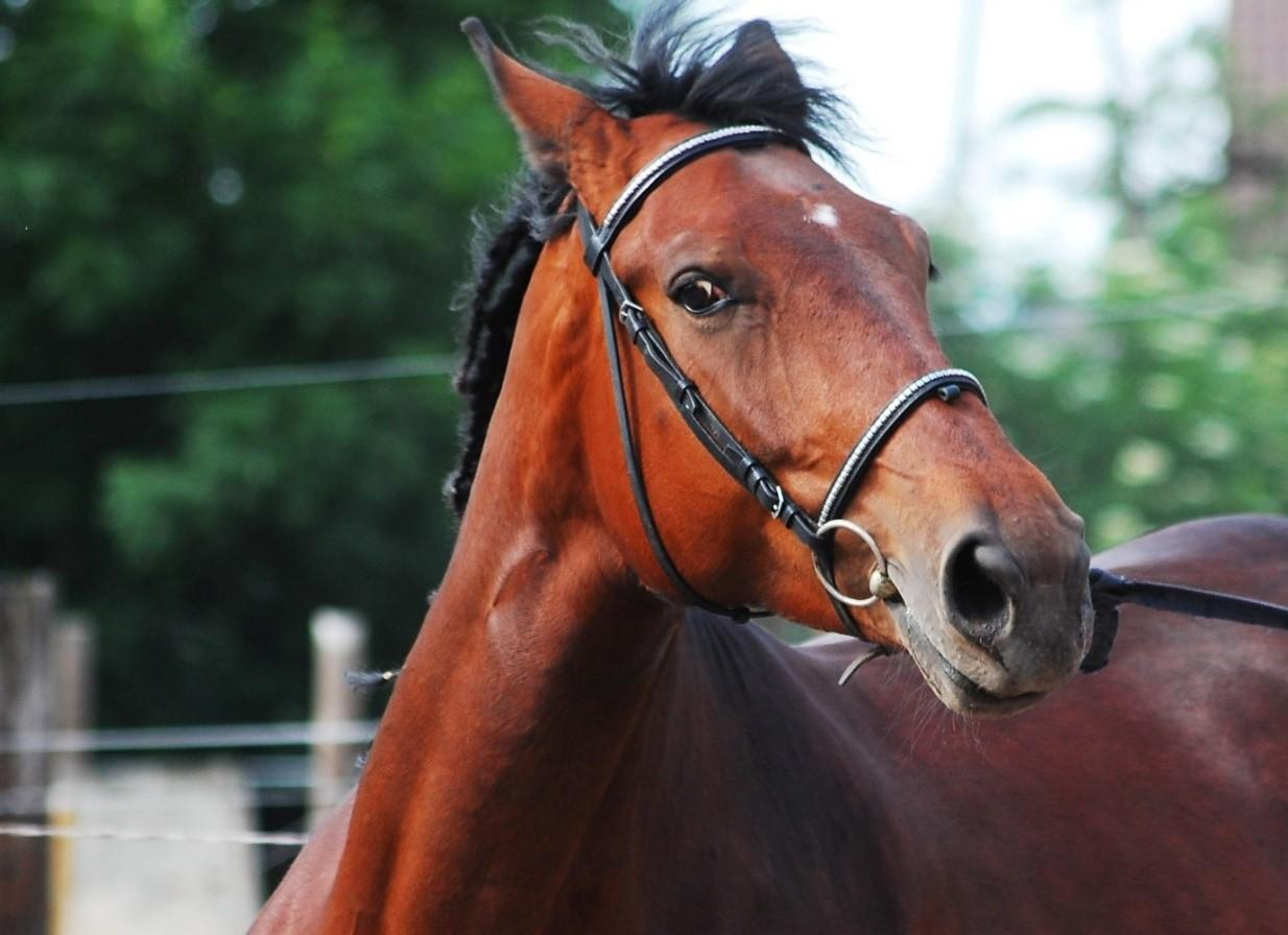 Animal Communication Horse