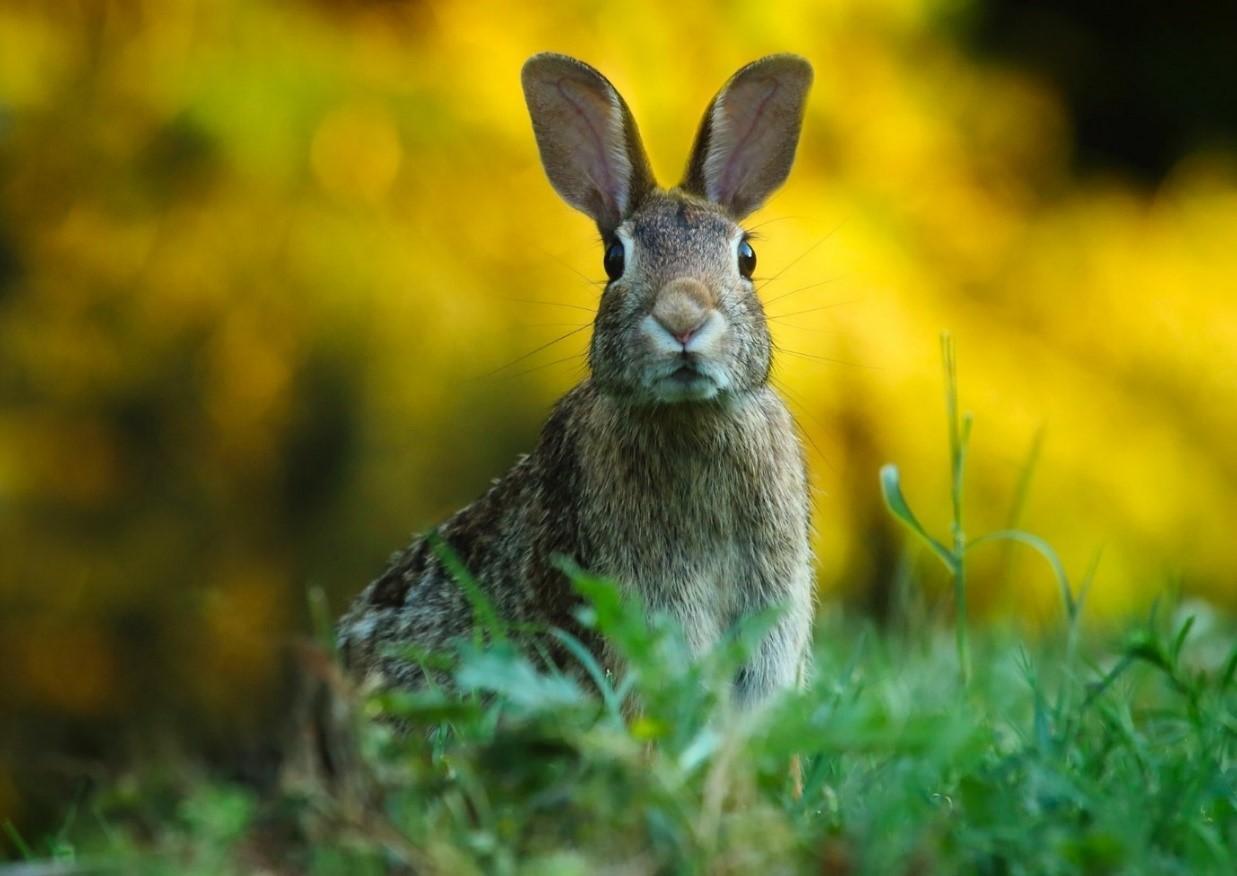 Animal Communication Rabbit